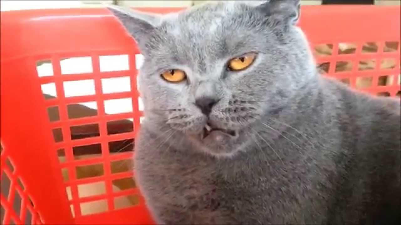 Kedinizi asla cezalandırmamanız için 5 neden