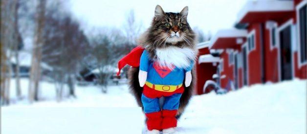 Kedinize Laf Edenlere Verebileceğiniz Alternatif Cevaplar