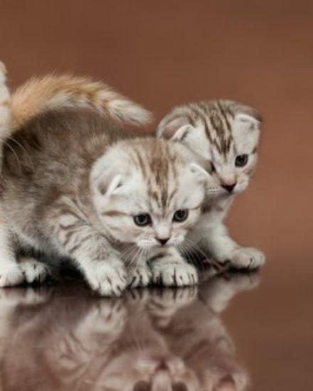 Image result for kedi fiyatları