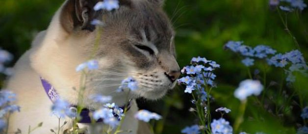 Kedi Kumu Kokusu Nasıl Giderilir? -Sıfır Koku-