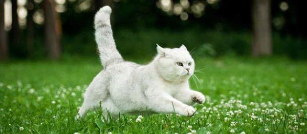 Cins Kedi Almanız İçin 10 Neden!