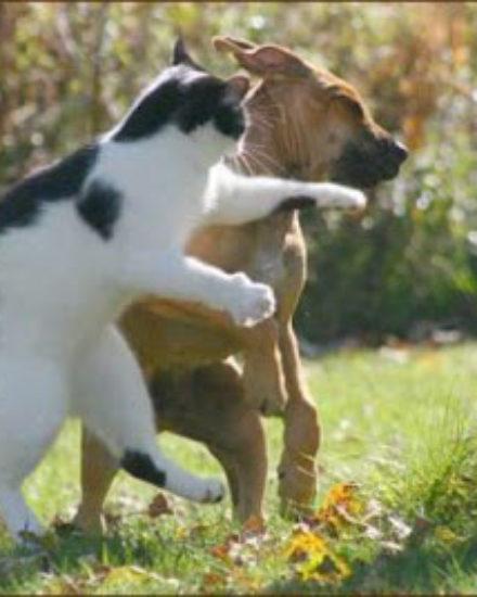 Hırsız Kediler!