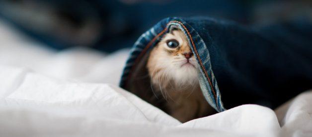 Kedilerde Kısırlaştırma Hakkında Her Şey, Kedi Kısırlaştırma