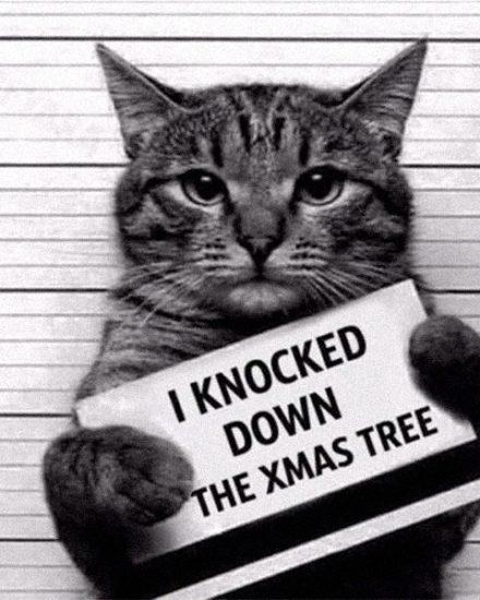 Suçlu Kediler