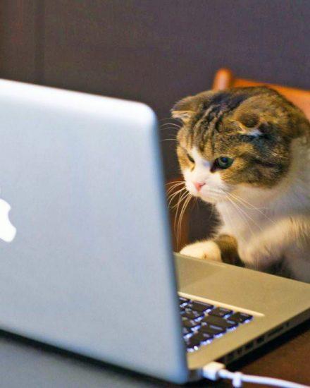 Kedi Karakter Analiz Testi