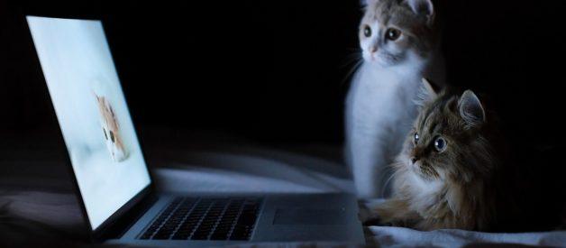 Kedi Sahiplenmeye Hazır Mıyım ?
