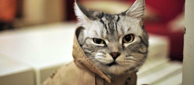 Aileyi Kedi Almaya İkna Etmek – Kedi Alma Garantili