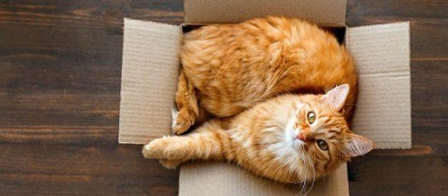 Kedi Sahiplendirme Sırasında Nelere Dikkat Etmeliyiz?