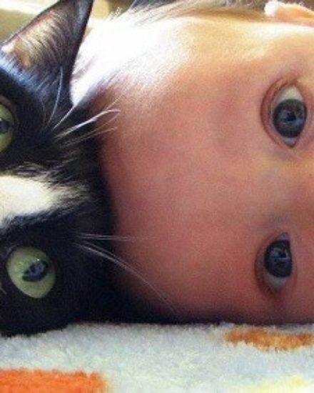 Sevimli Kediler Ve Bebekler – Kedi Resimleri