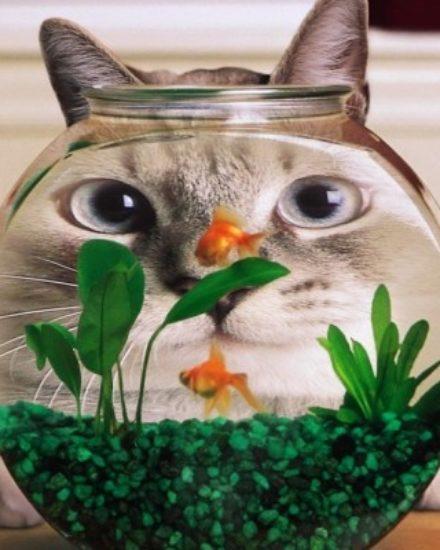 Kedilerin Gariplikleri – Neden Yapıyorlar?