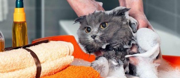 Kedi Yıkamak Zararlı Mıdır? Kedi Nasıl Yıkanır?