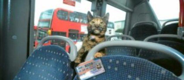 Kedi İle Otobüs Yolculuğu – Şehirler Arası Kedi Taşıma