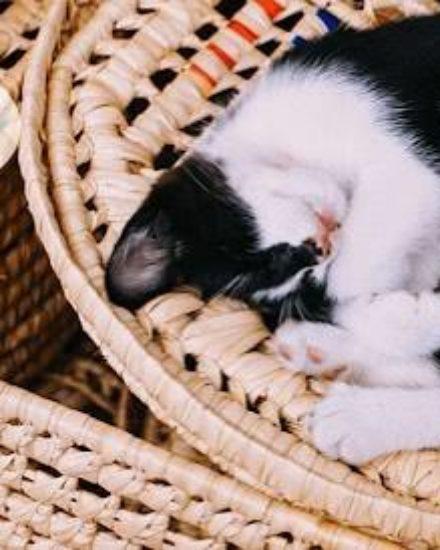 Spectrum Kedi Maması Yorum – İnceleme