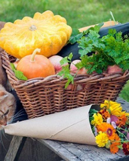 Kediler İçin Sağlıklı Sebzeler Nelerdir?