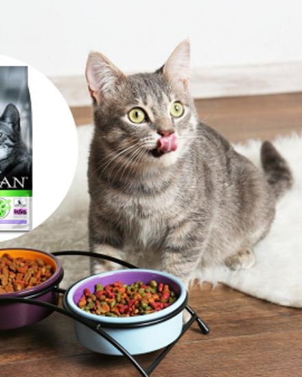 ProPlan Kısır Kedi Maması Yorum