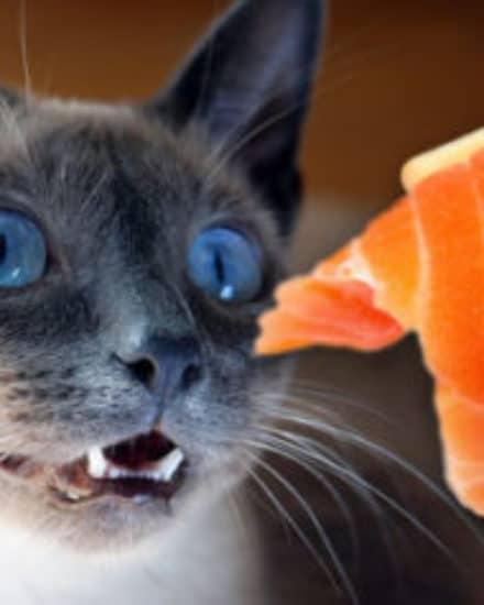 Kedilerde Çiğ Beslenmede Zararlı Bakteriler