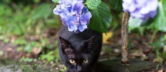Ücretsiz Kedi Sahiplendirme Rehberi
