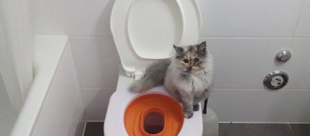 Kediyi Klozete Alıştırmak Hakkında Her Şey