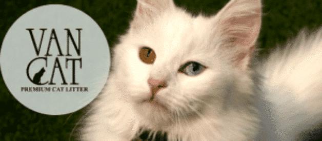 Vancat Kedi Kumu Yorum – İnceleme