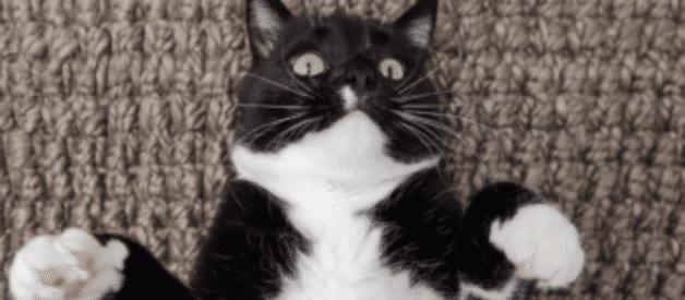 Kedilerde İç Parazit Hakkında Her Şey