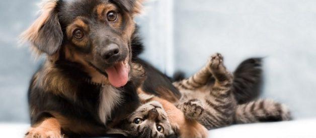 Evde Kedi Köpek Beslemek – Yasal Haklarımız