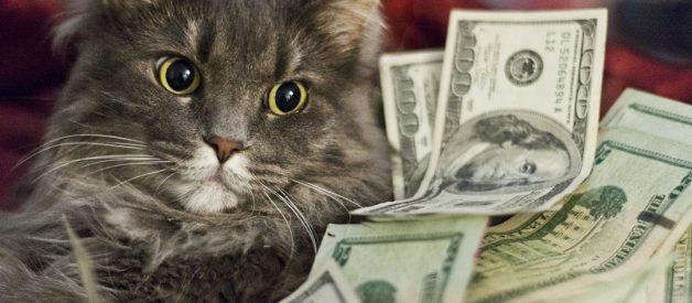 Bir Kedinin Aylık Masrafı Ne Kadar Tutar? 2019