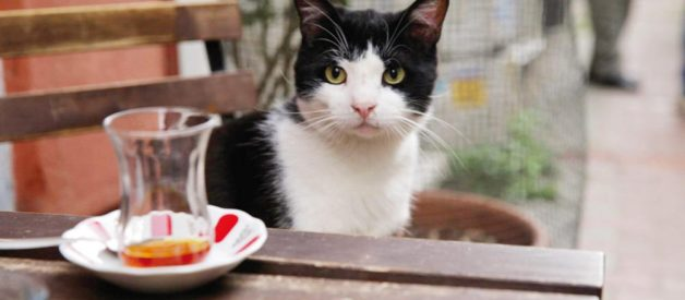 Sokakta Apartman Ve Çevresinde Kedi Beslemek Suç Mu?