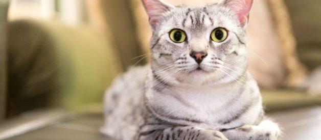 Kedilerde Çiğ Beslenme Takviyeler – Supplementler