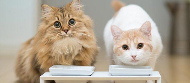 Yaş Kedi Maması Sağlıklı Mı? Hangi Yaş Mama?