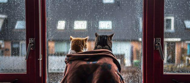 Kedi Filesi – Kedi Sinekliği Nasıl Yapılır?