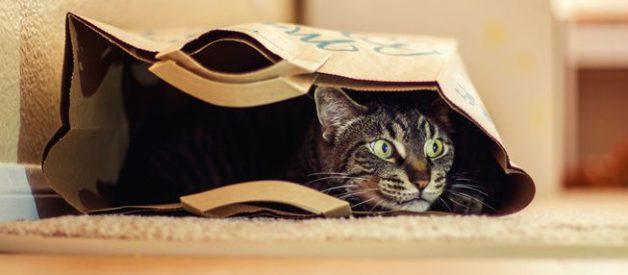 Kedi İçin Alışveriş – Petcanlar.com