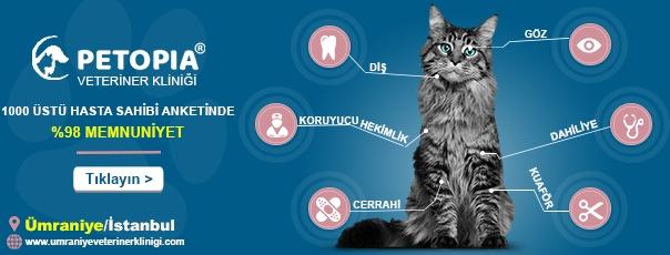 ümraniye veteriner kliniği petopia
