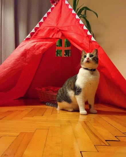 Kedilerde Astım – Suzi'nin Astım Süreci