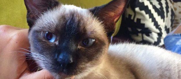 Dişi Kedi Kısırlaştırma – Müjgan'ın Kısırlaştırma Süreci