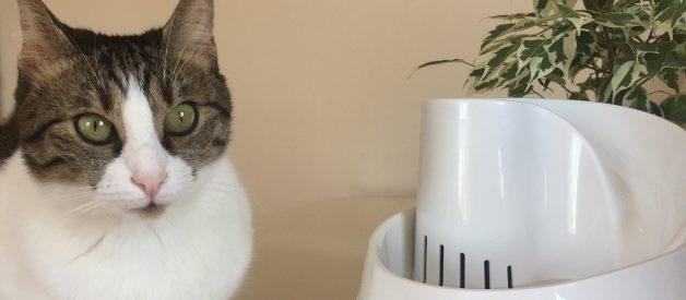 Kedi Su Şelalesi – En İyi Kedi Su Pınarı