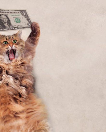 Veteriner Muayene Ücretleri – Kedi Aşı Fiyatları 2021