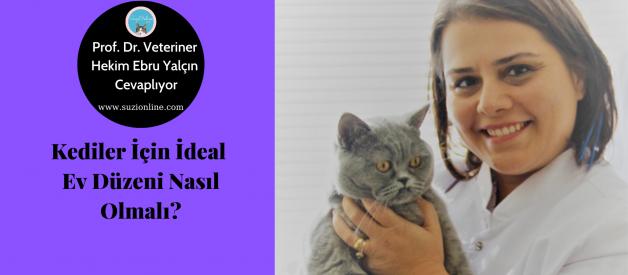 Kediler İçin Ev Düzeni Nasıl Olmalı? – Kedi Psikolojisi