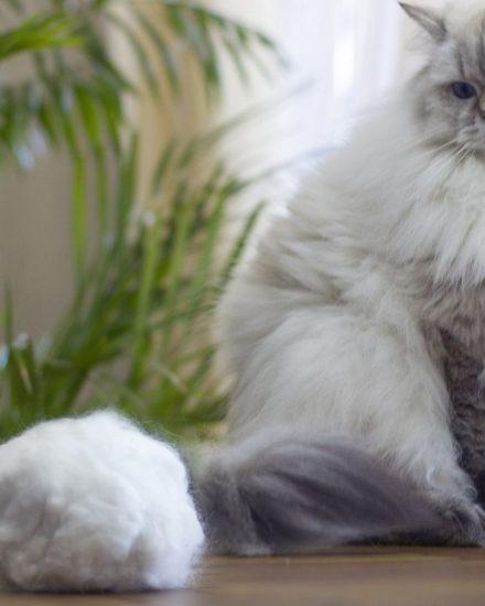 Kedi Malt Macunu İncelemeleri – En İyi Kedi Maltı