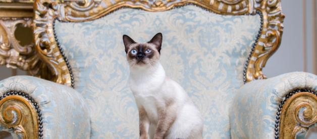 Kedi Bakım Masrafları 2021 – Aylık ve Yıllık Maliyet