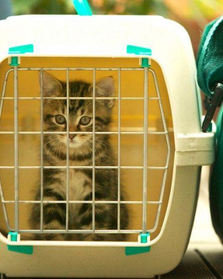 Kedi Taşıma Çantası İnceleme – En İyi Kedi Taşıma Kabı