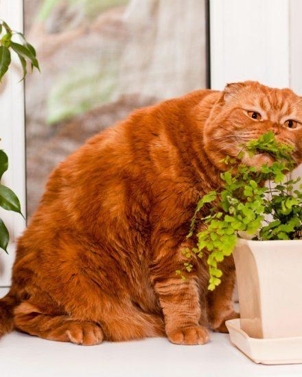 Kedi Dostu Bitkiler Nelerdir? Kedilere Zararsız Bitkiler
