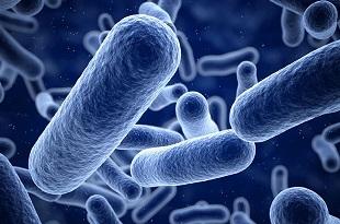 Infectii intestinale si parazitare - elta90mr